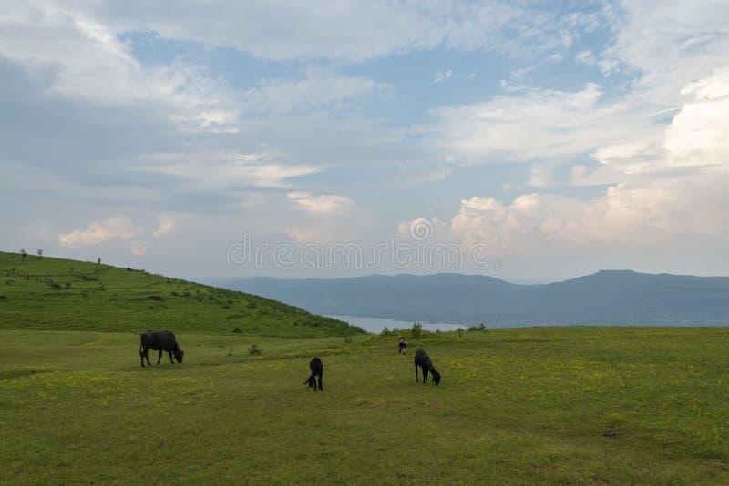 Plateau scénique de Yavteshwar chez Satara, maharashtra, Inde photo stock