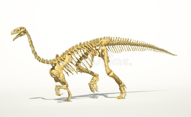 Plateosaurusdinosaurie, fullt foto-realistiskt skelett, perspektivsikt. royaltyfri illustrationer