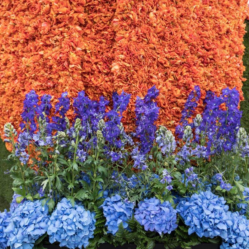 Platforma z tulipanami i hiacynty podczas tradycyjnych kwiatów paradujemy Bloemencorso obrazy stock