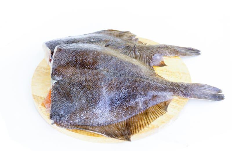 Platija cruda de los pescados frescos foto de archivo