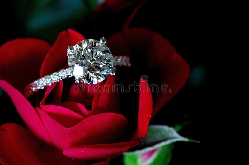 Platina Diamond Ring On Red Rose royalty-vrije stock foto