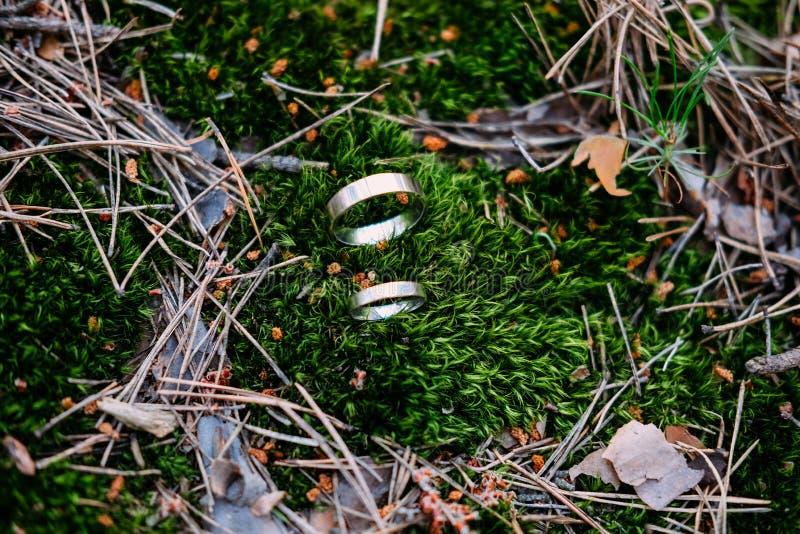 Platineheringe auf dem grünen Moos lizenzfreies stockfoto
