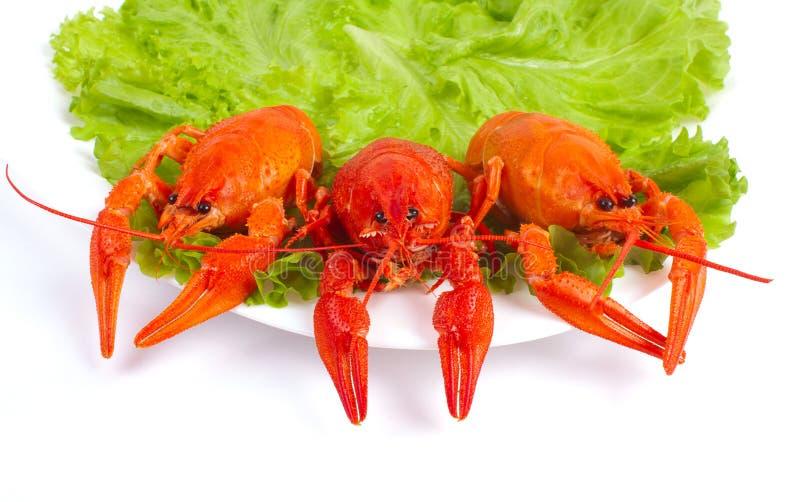 Plato con los cangrejos y la lechuga hervidos foto de archivo libre de regalías