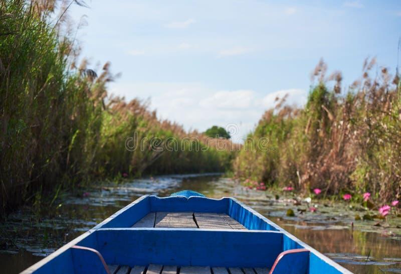 Plats av gräs på sidan av sjön och rosa lotusblommor från det turist- fartyget royaltyfri bild