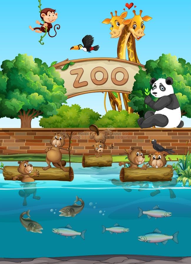 Download Plats På Zoo Med Många Vilda Djur Vektor Illustrationer - Illustration av strömförande, giraff: 78730388