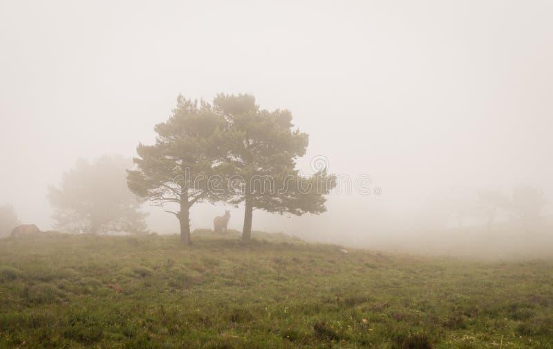 Platsen av sörjer träd i dimma, med en häst royaltyfri fotografi