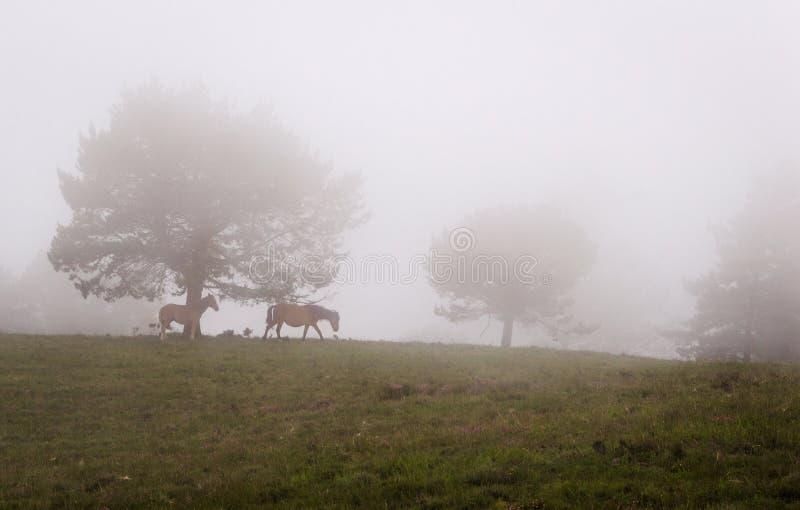 Platsen av sörjer träd i dimma, med en sto och hennes barnaskara royaltyfri fotografi