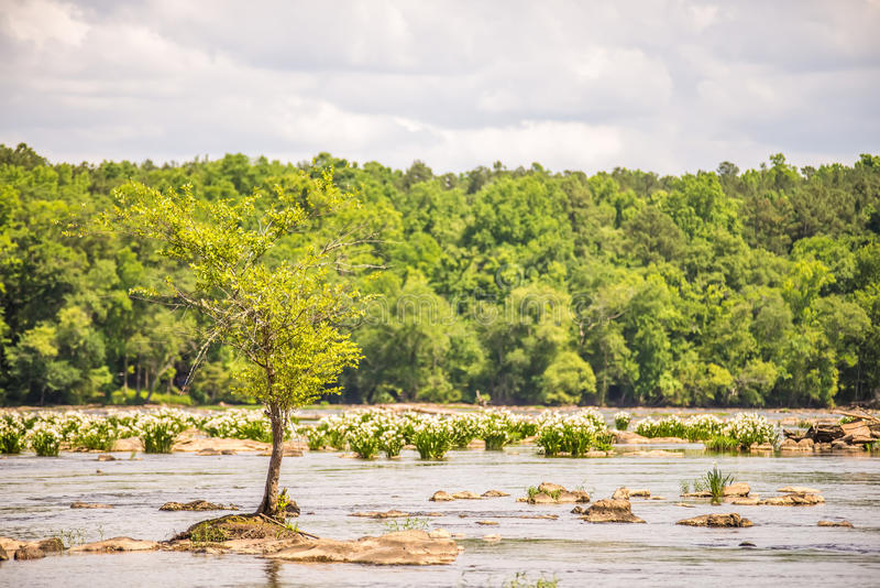 Platser runt om landsfordkanaldelstatspark i South Carolina royaltyfria bilder