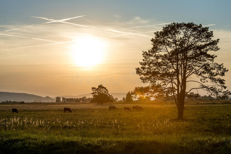Platteland bij zonsondergang royalty-vrije stock afbeelding