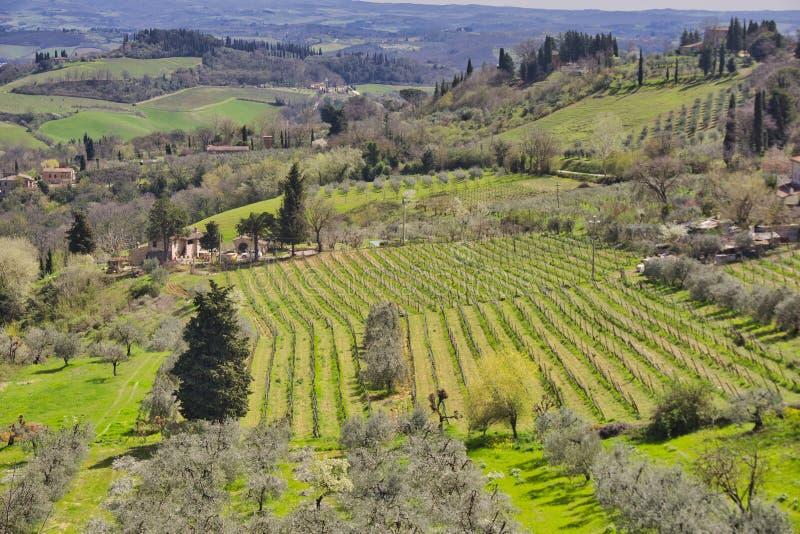 Platteland en chiantiwijngaarden dichtbij inTuscany San Gimignano, Italië royalty-vrije stock foto