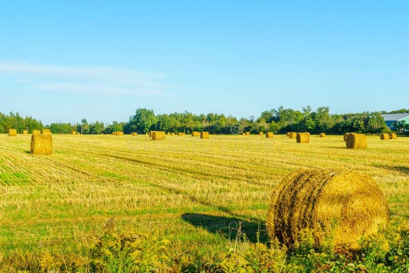 Platteland en hooibergen dichtbij borden-Carleton, PEI royalty-vrije stock afbeeldingen