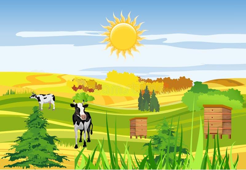 Platteland, koeien, landbouwgrond, bijenkorven, groene weide en heuvels, vector illustratie