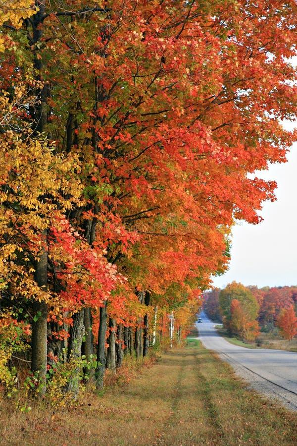 Platteland ToneelDrvie in de Herfst stock foto