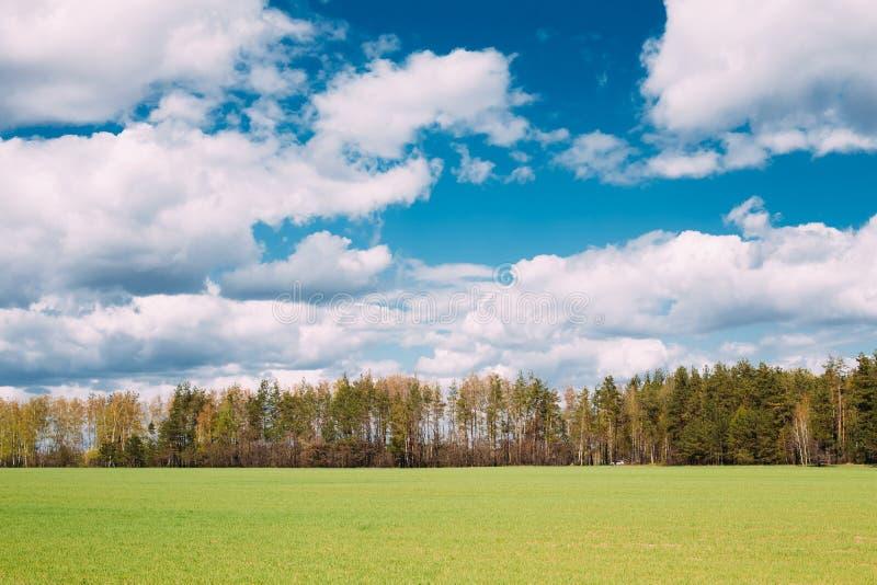 Plattelands Landelijk Gebied of Weidelandschap met Groen Gras op Voorgrond en Forest On Background Under Scenic-de Lente royalty-vrije stock afbeelding