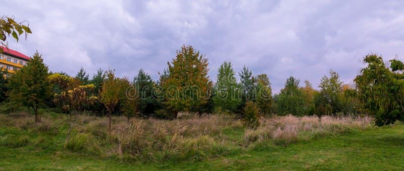 Plattelands Landelijk Gebied of Weidelandschap met Groen Gras op Voorgrond en Forest On Background Under Scenic-de Lente stock foto