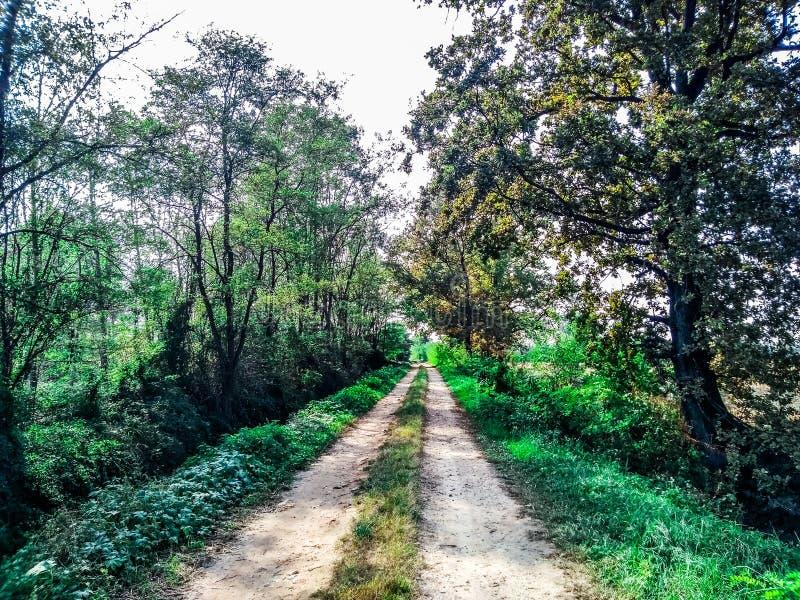 Plattelands landelijke bosweg stock foto