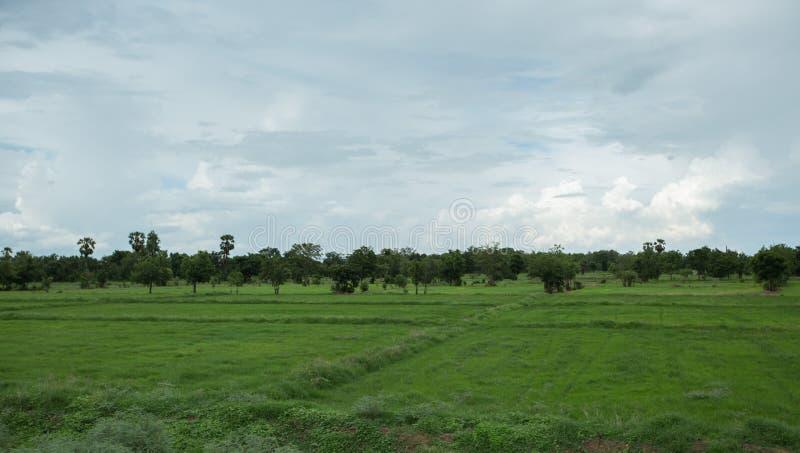 Plattelandscornfield in Kanchanaburi, Thailand royalty-vrije stock fotografie