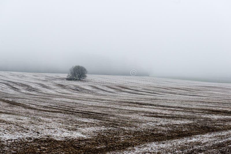 Download Plattelandsgebieden In De Vroege Lente Stock Foto - Afbeelding bestaande uit stralen, nave: 54077268