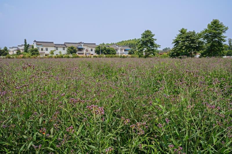 Plattelandsgebouwen in bloeiende landbouwgrond stock afbeelding