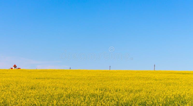 Plattelandshuisje op geel bloemengebied met duidelijke blauwe hemel en transmissielijnen De lente en de zomer landelijk landschap stock foto