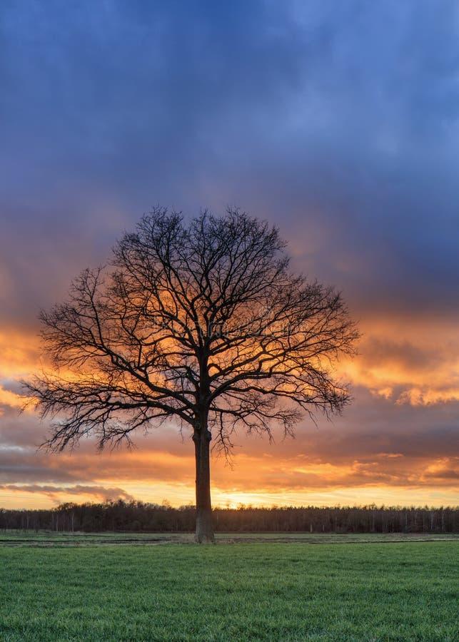 Plattelandslandschap met een mooie boom en een kleurrijke zonsondergang, Weelde, Vlaanderen, België stock fotografie