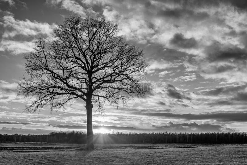 Plattelandslandschap met een mooie boom en een verbazende zonsondergang, Weelde, België stock afbeeldingen