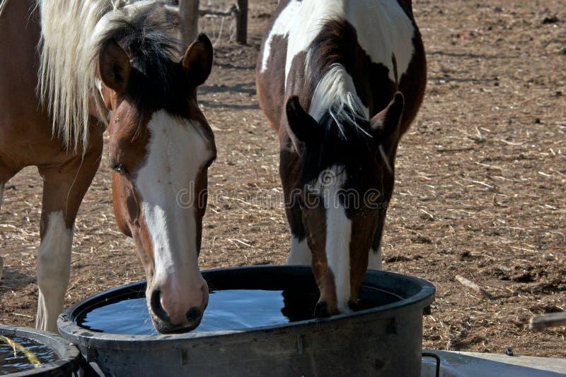 Plattelandslandschap met het drinkwater van twee verfpaarden stock foto