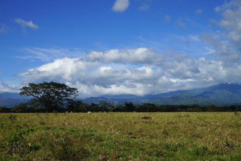 Plattelandslandschap met wolken, bergen, tropisch vegetatie en vee in Rincon, Panama royalty-vrije stock afbeelding