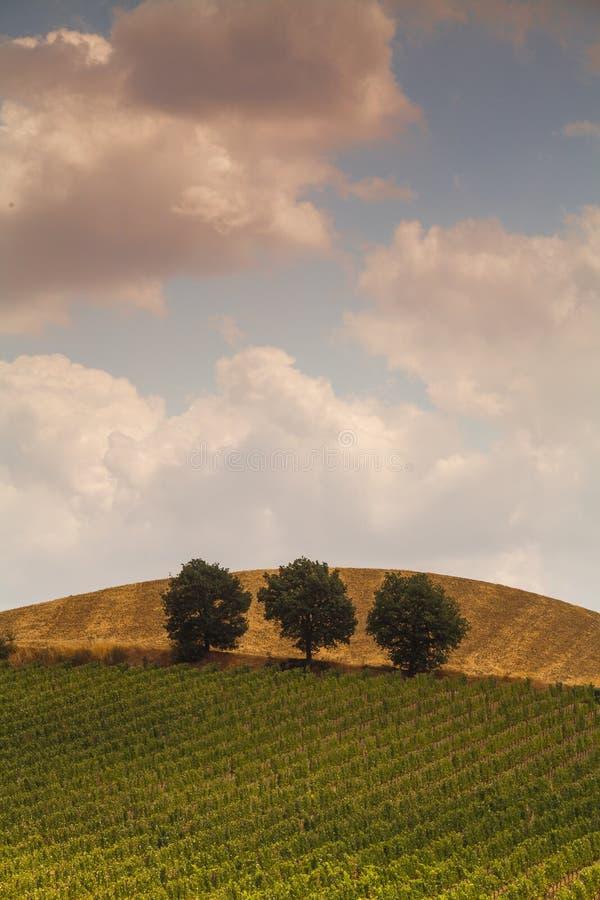 Plattelandslandschap in Val D ?Orcia, Toscani?, Itali? royalty-vrije stock afbeeldingen