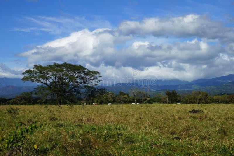Plattelandsmening met wolken, bergen, tropisch vegetatie en vee in Rincon, Panama royalty-vrije stock afbeeldingen