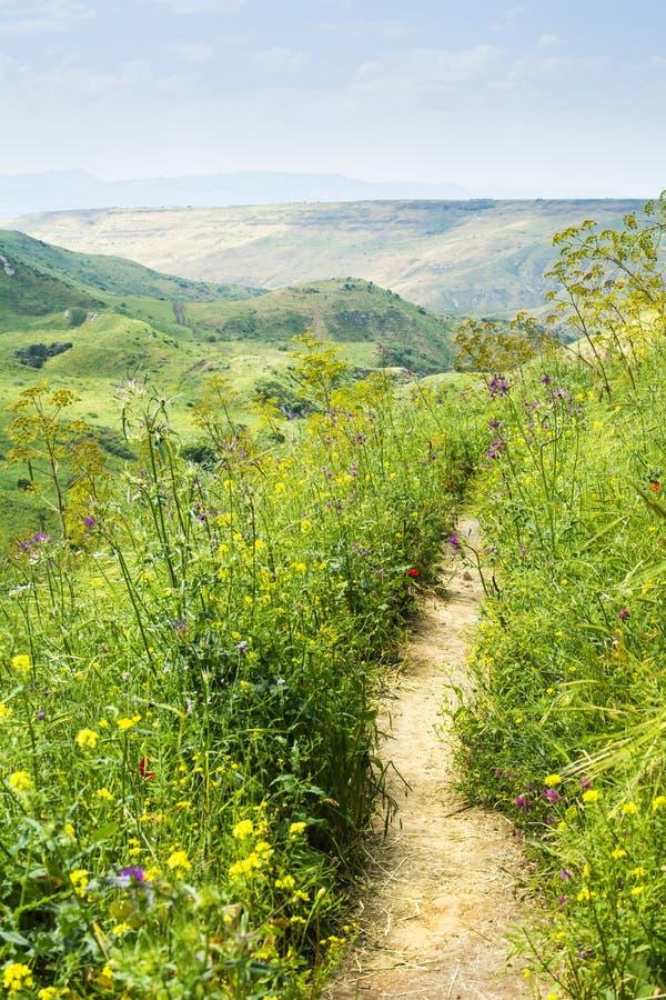 Plattelandspad tussen groene heuvels en bloei van wilde bloemen in het voorjaar Pure Natuur-Romantische wandeltocht stock fotografie