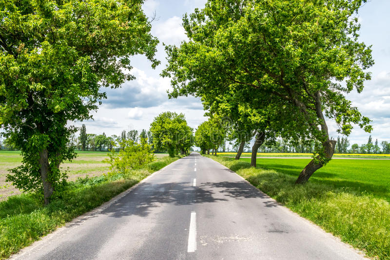 Plattelandsweg tussen bomen royalty-vrije stock afbeelding