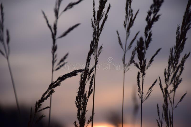 Plattelandszonsondergang met Grey Colored Sky stock afbeeldingen