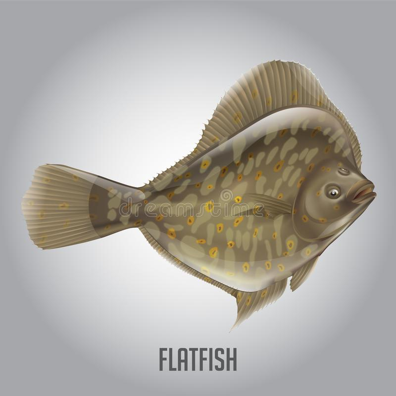 Platvissen Vectorillustratie stock fotografie