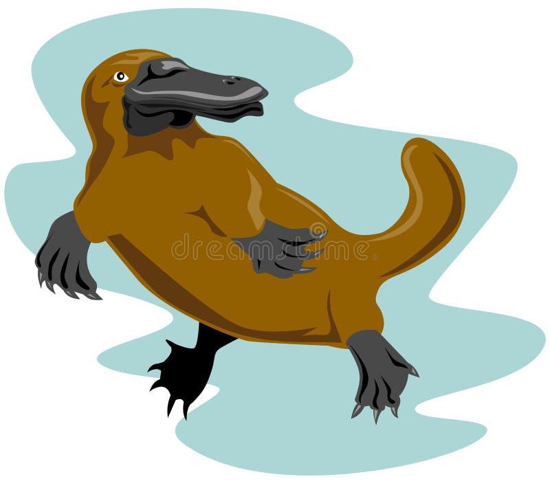 Platypus lizenzfreie abbildung