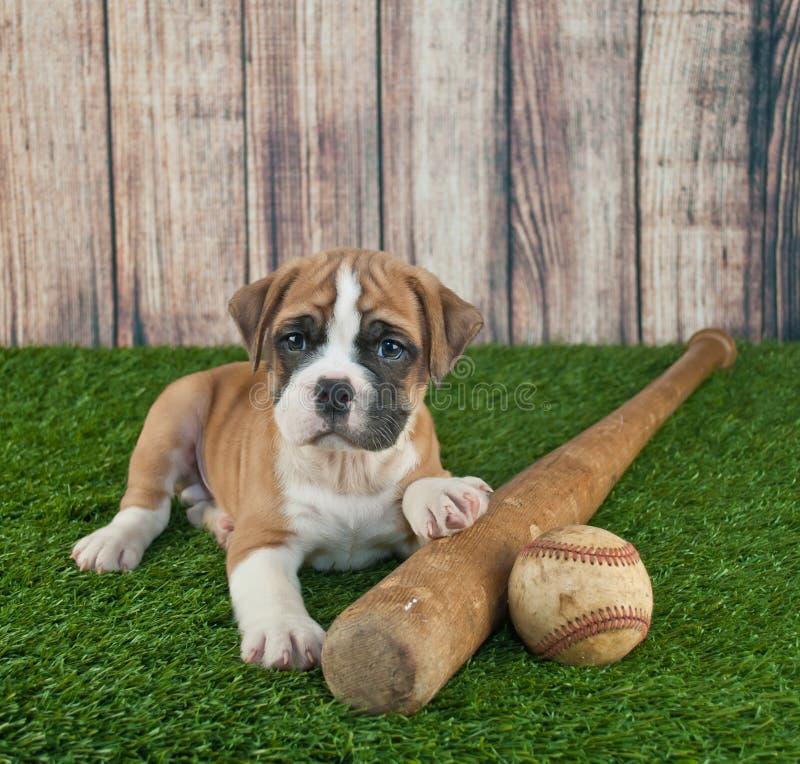 Amazing Bulldog Ball Adorable Dog - play-ball-cute-little-bulldog-puppy-laying-grass-baseball-bat-him-55072712  Collection_519  .jpg