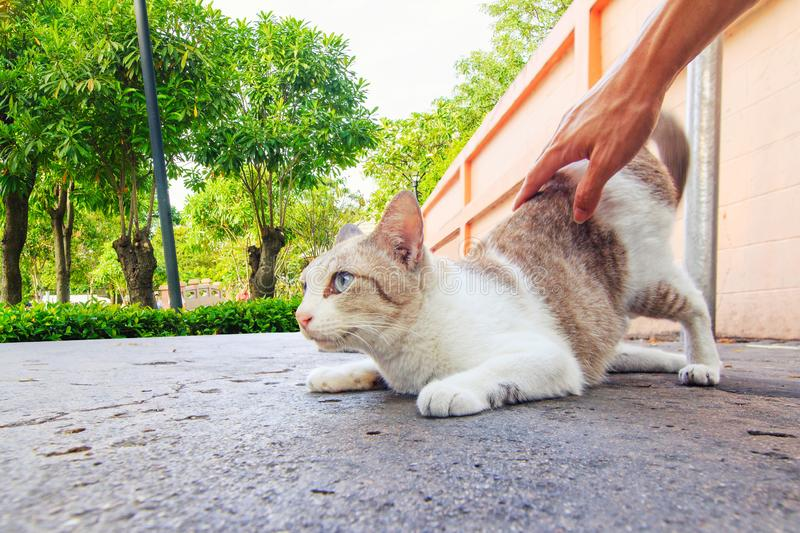 Play with cat in the park royalty free stock photography