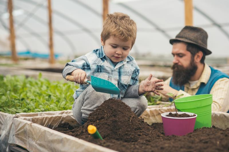 Play with ground. small child play with ground. play with ground in greenhouse. father and son play with ground. Gardener royalty free stock photography