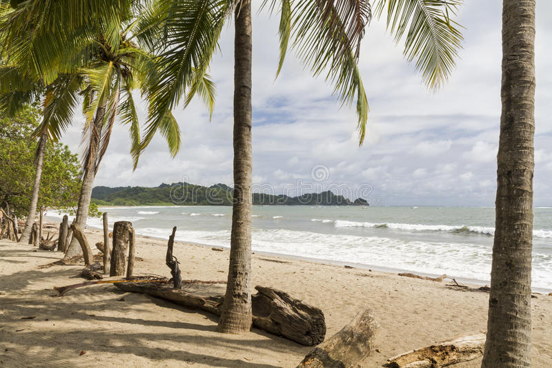 Playa加尔萨棕榈和漂流木头篱芭 免版税库存图片