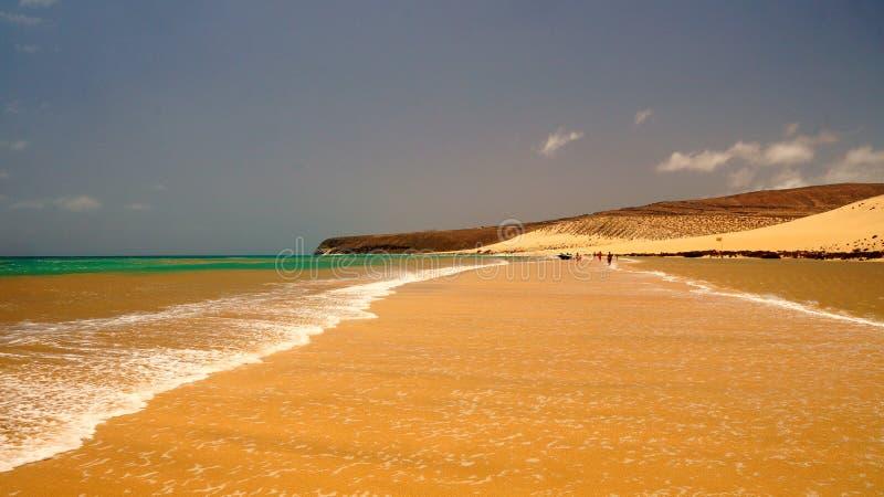 Playa处女的Sotavento -,狂放的海滩在费埃特文图拉岛,加那利群岛,西班牙 图库摄影