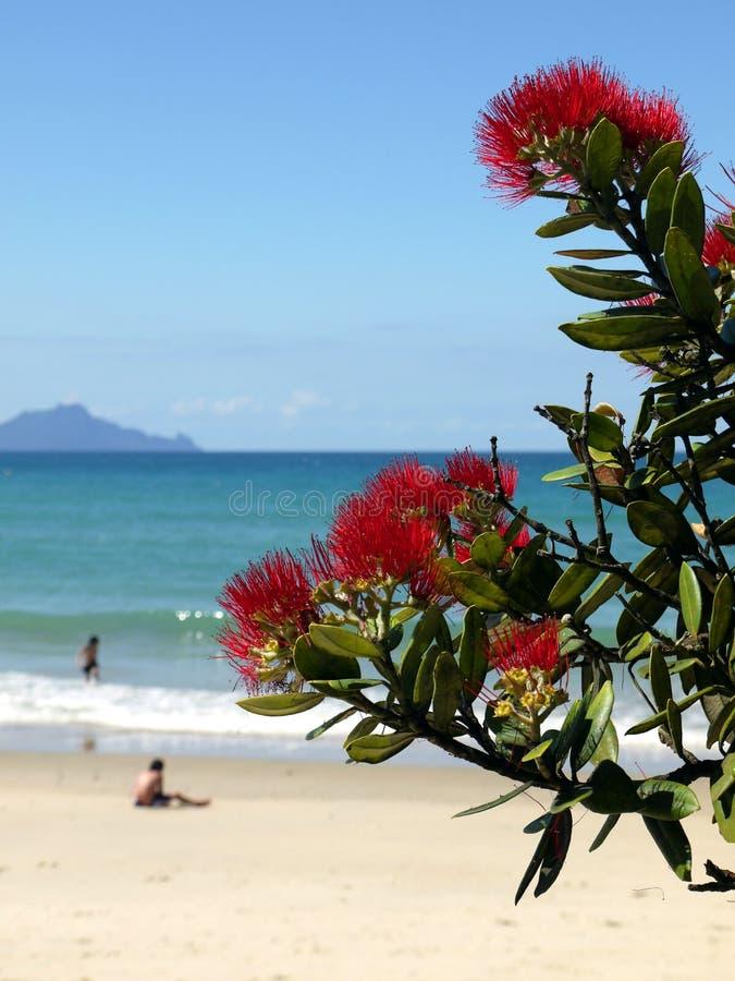 Playa: árbol y nadadores florecientes del pohutukawa fotos de archivo