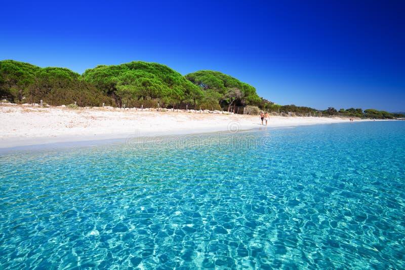 Playa arenosa de Palombaggia con los árboles de pino y agua clara azul, Córcega, Francia foto de archivo libre de regalías