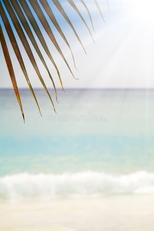 Playa arenosa exótica del verano con las palmas de la falta de definición y el fondo del mar fotografía de archivo