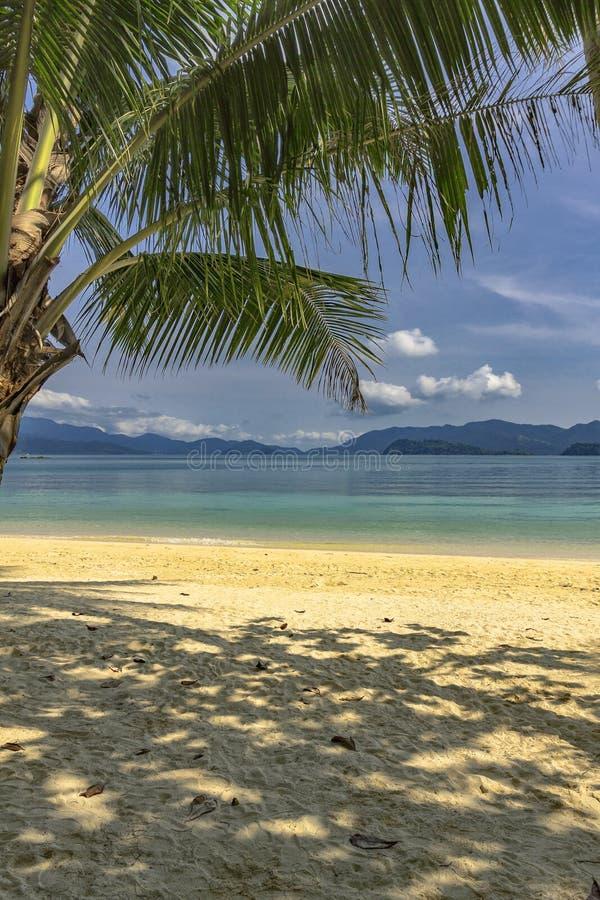 Playa arenosa tropical con las palmeras foto de archivo libre de regalías