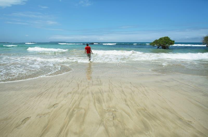 Playa blanca hermosa de la arena en las islas de las Islas Galápagos, Ecuador fotografía de archivo