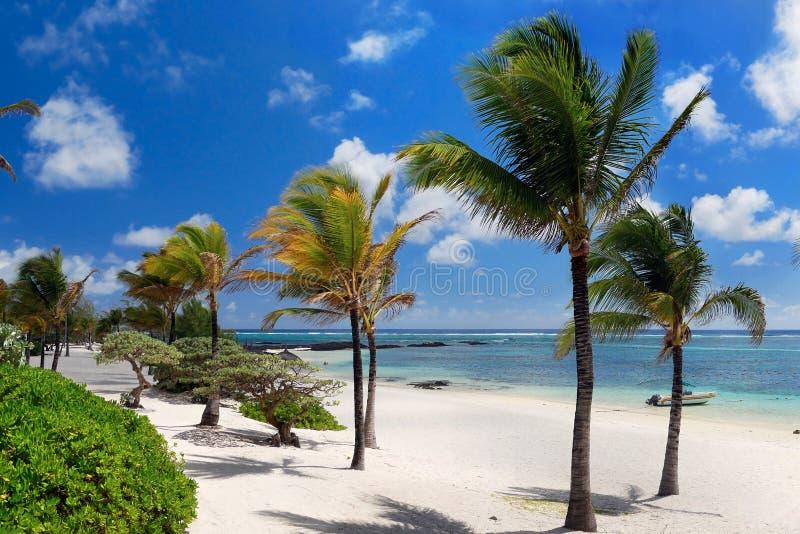 Playa blanca que sorprende, vacaciones tropicales, Mauritius Island imagen de archivo libre de regalías