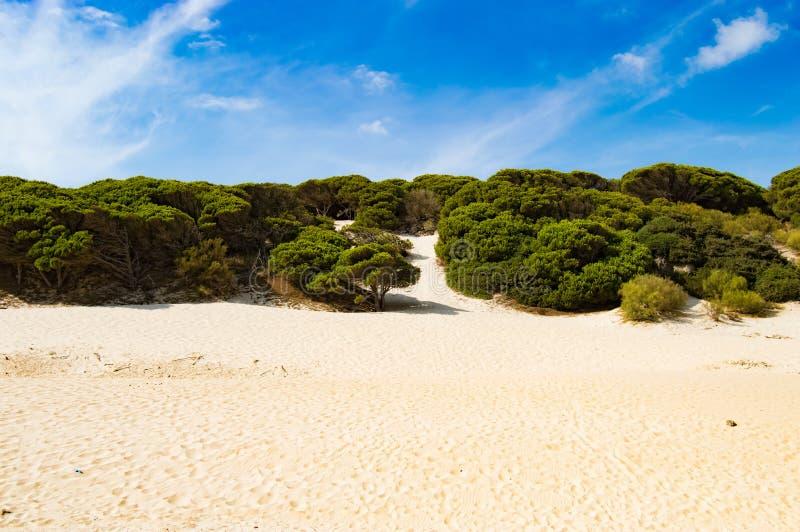 Playa Bolonia de las dunas foto de archivo libre de regalías