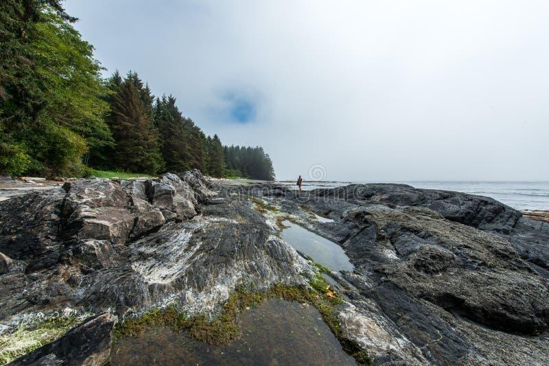 Playa botánica - isla de Vancouver imagen de archivo