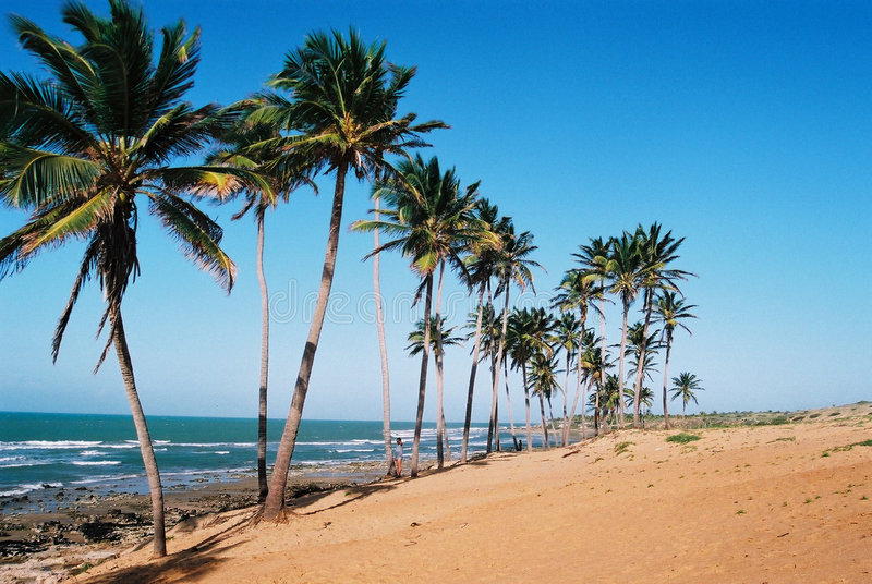 Playa brasileña tropical fotos de archivo libres de regalías