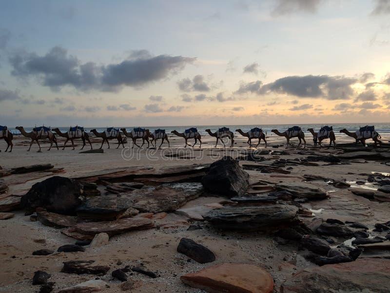 Playa Broome Australia occidental del cable de los camellos fotos de archivo